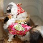 Japanese Kimono Pet Costume