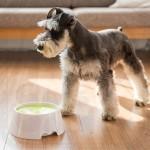 Slow-Down Pet Water Bowl